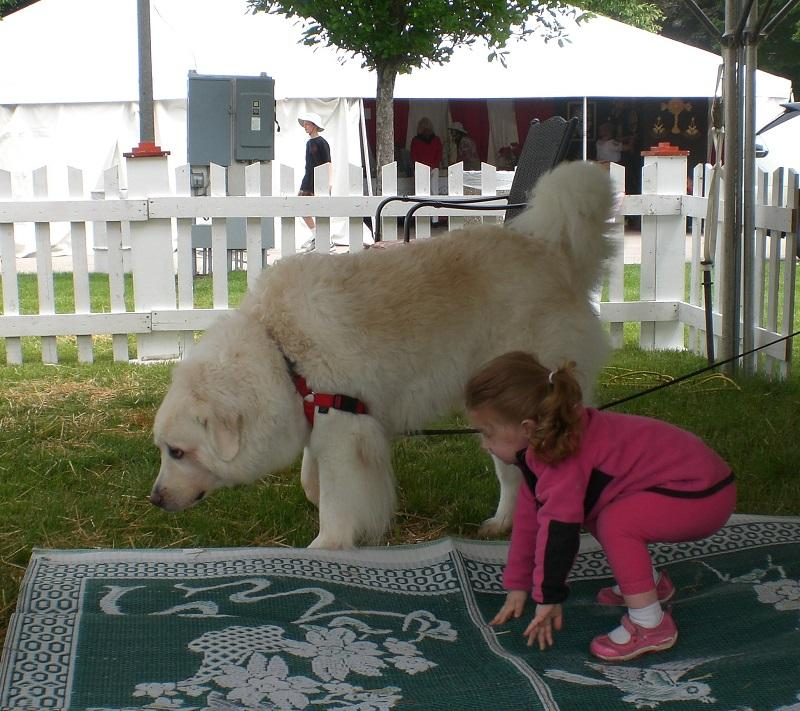 Cute Big Dogs Adorable Enough To Force You To Adopt Them Right Now Storytimes