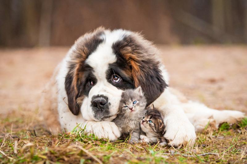 Friendliest Dog Breeds