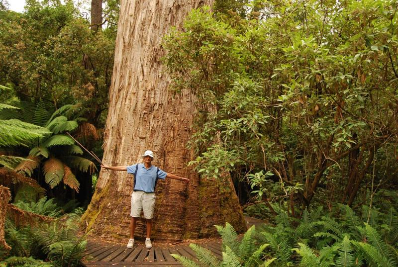 Amazing Natural wonders Top 10 Tallest