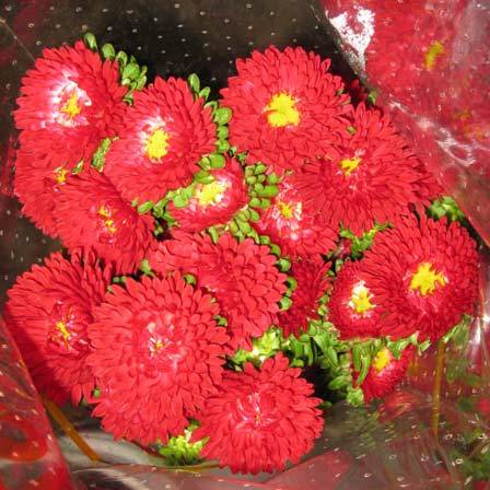 Most Beautiful Red Flowers