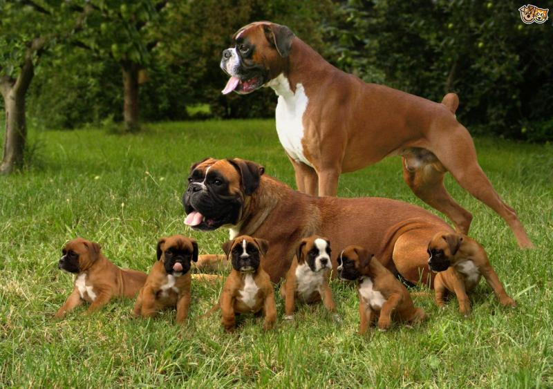 World's Most Dangerous Dogs In Hindi