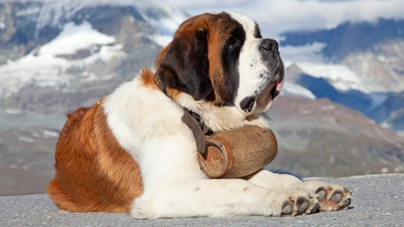 Most Beautiful Dog Breeds