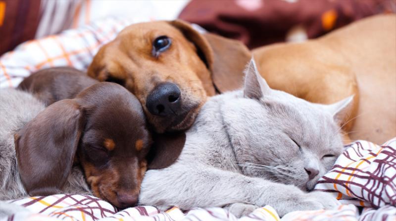 strictest animal welfare rules