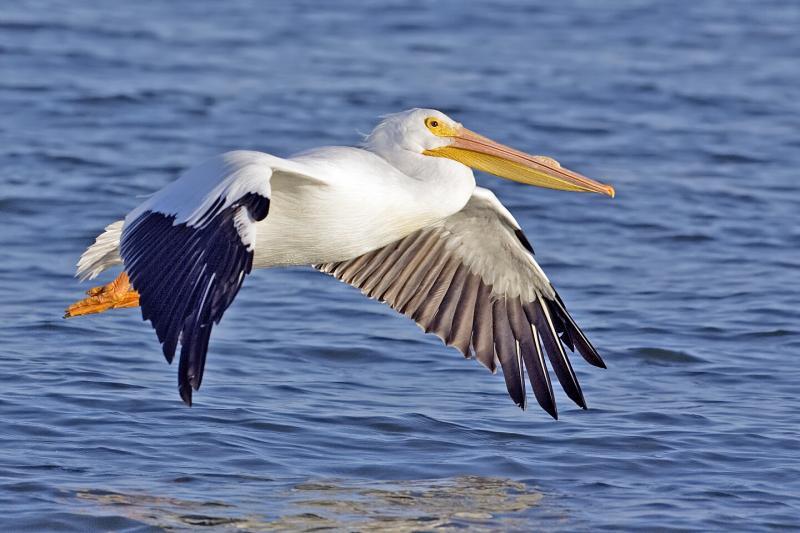 birds with long beak