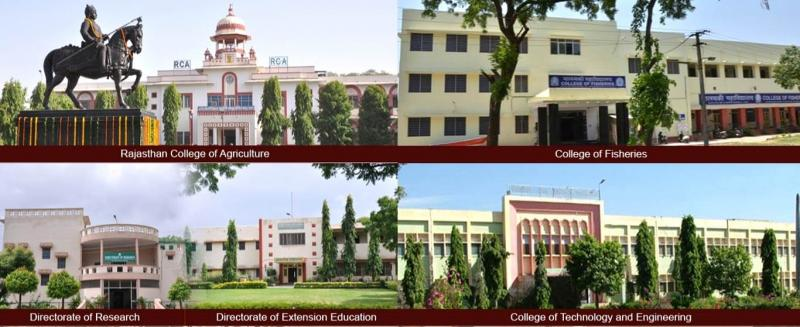 Top 10 Rajsthan Engineering Collage In Hindi