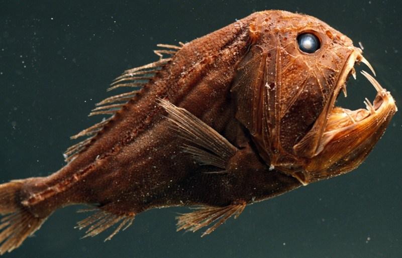 Most Unusual Deep-Sea Creatures