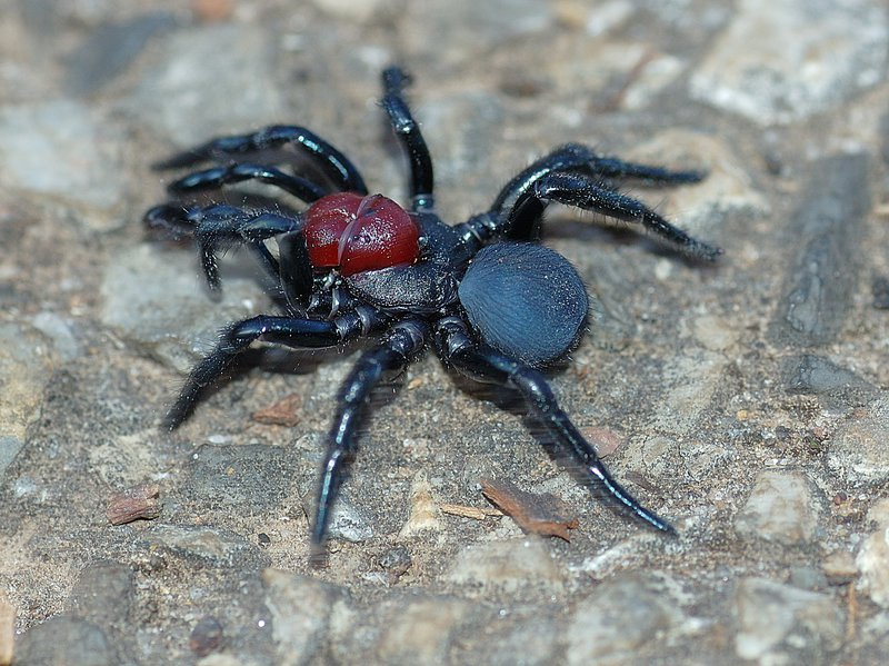 Most Dangerous Spiders in the World