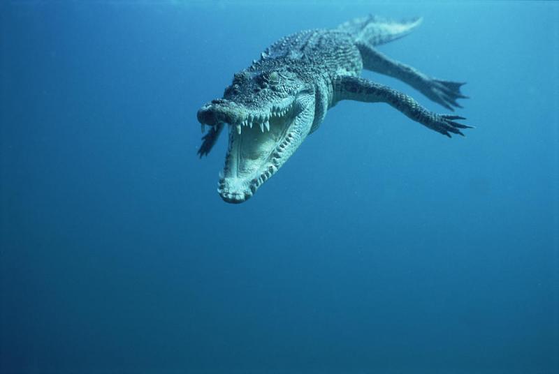 Most Dangerous Sea Creatures