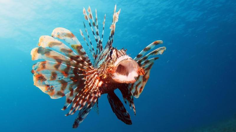 Most Dangerous Sea Creatures