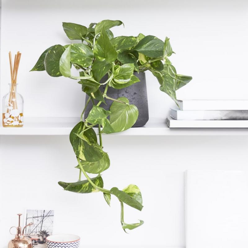 Most Popular Indoor Houseplants