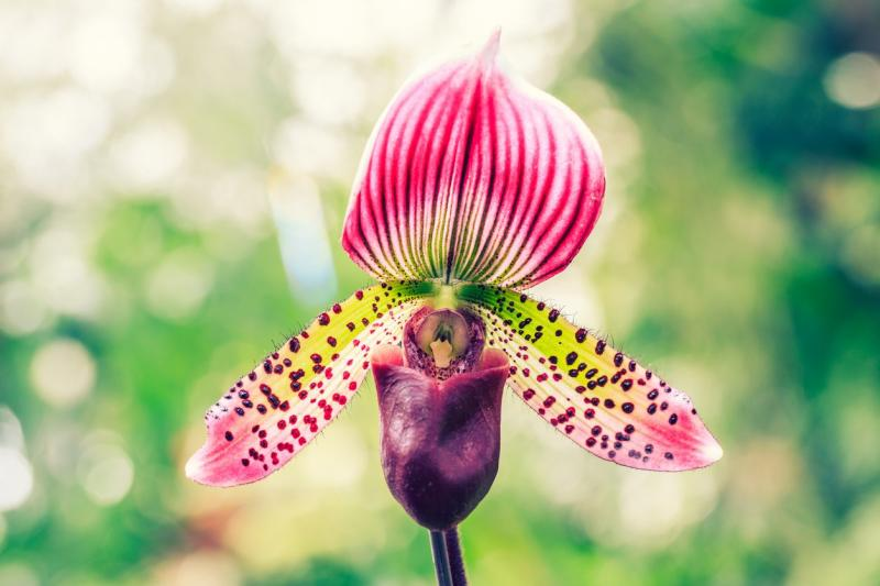 Most Unique and Unusual Flowers in the World