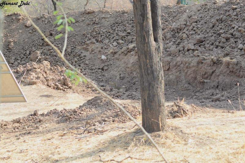 Leopard is Hidden in the Photo