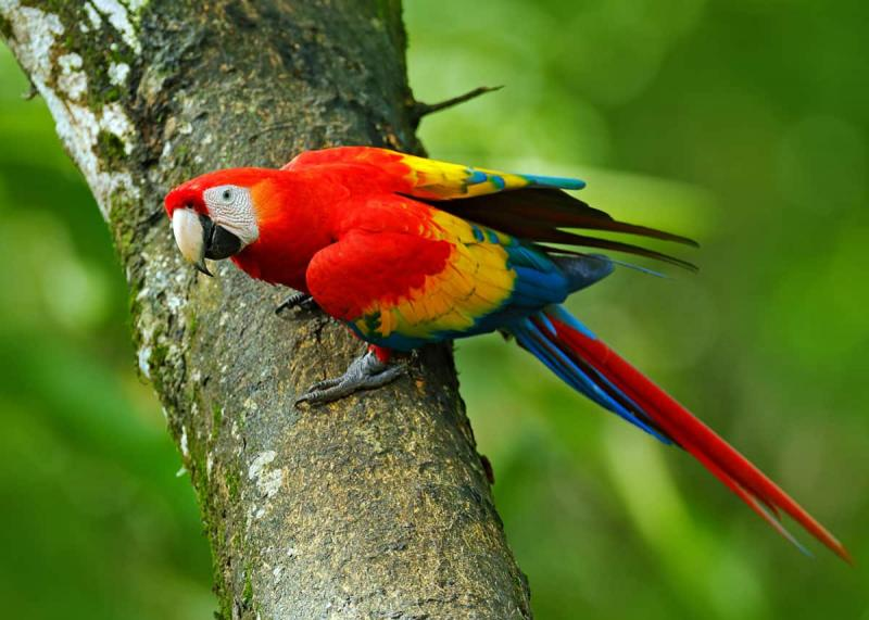Most Beautiful Parrots in the World