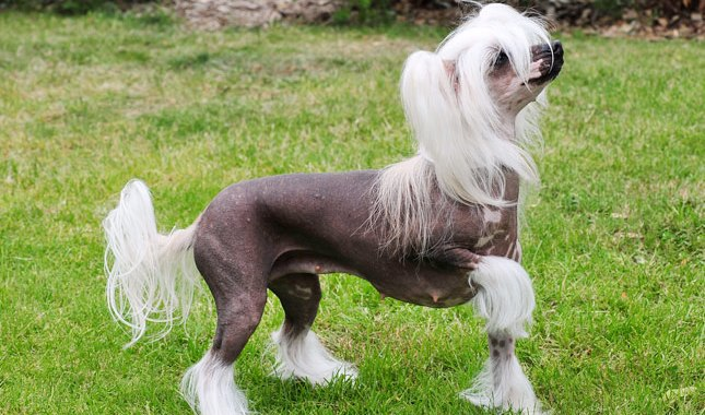 Most Hilarious Dog Breeds