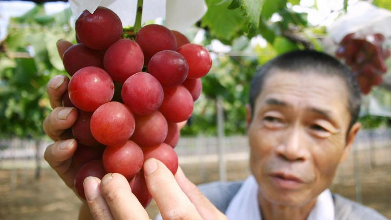 World Most Expensive Grapes In Hindi