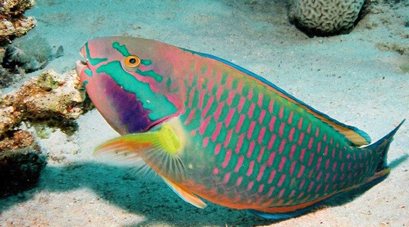 Most Beautiful Fishes In The World