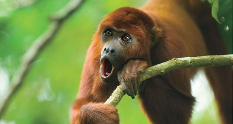 Loudest Animals in the World