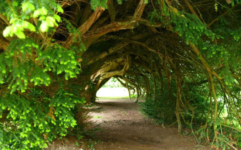 Most Amazing Tree Tunnels in the World