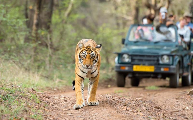 Best Places to Visit in Rajasthan