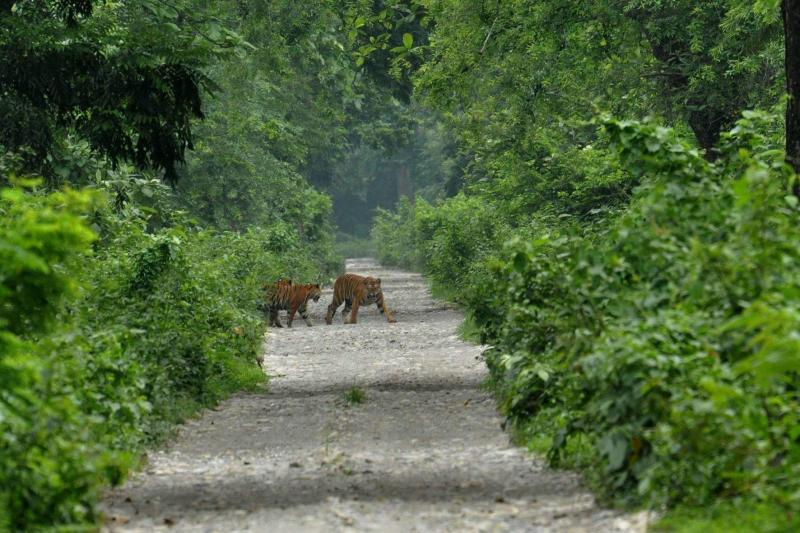 7 Most Popular Wildlife Destinations In Wildlife calling? Head to Assam for a spectacular trip