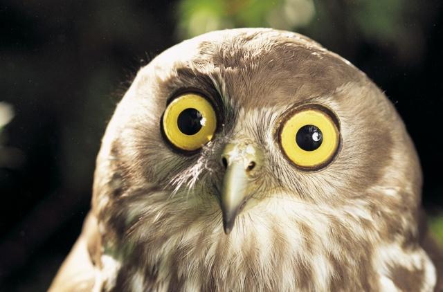 Greatest Owl Pics