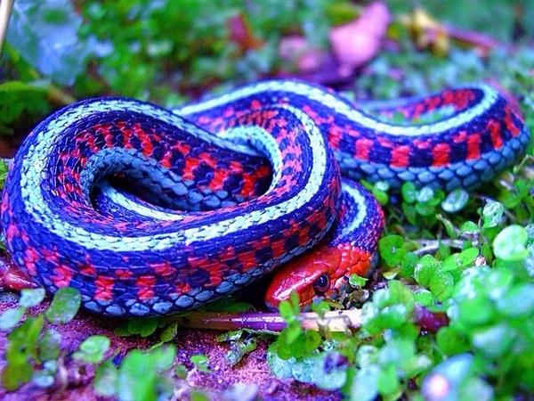 Interesting Information About Snakes